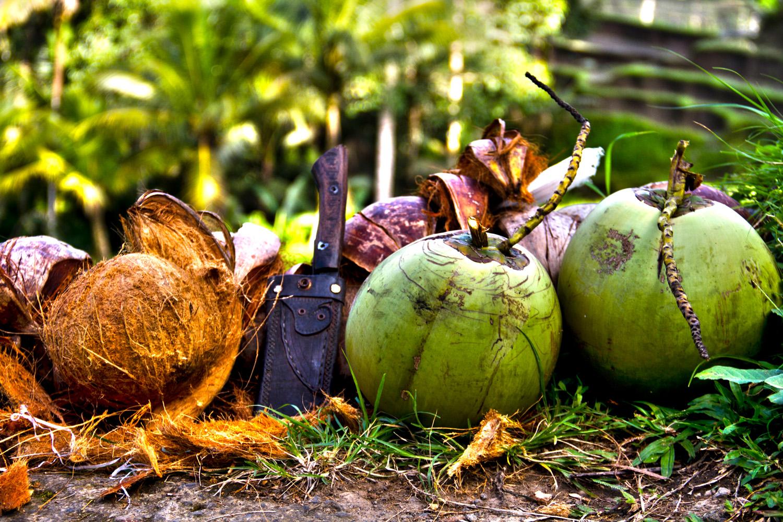 Coconuts, Bali (Andy Webb)