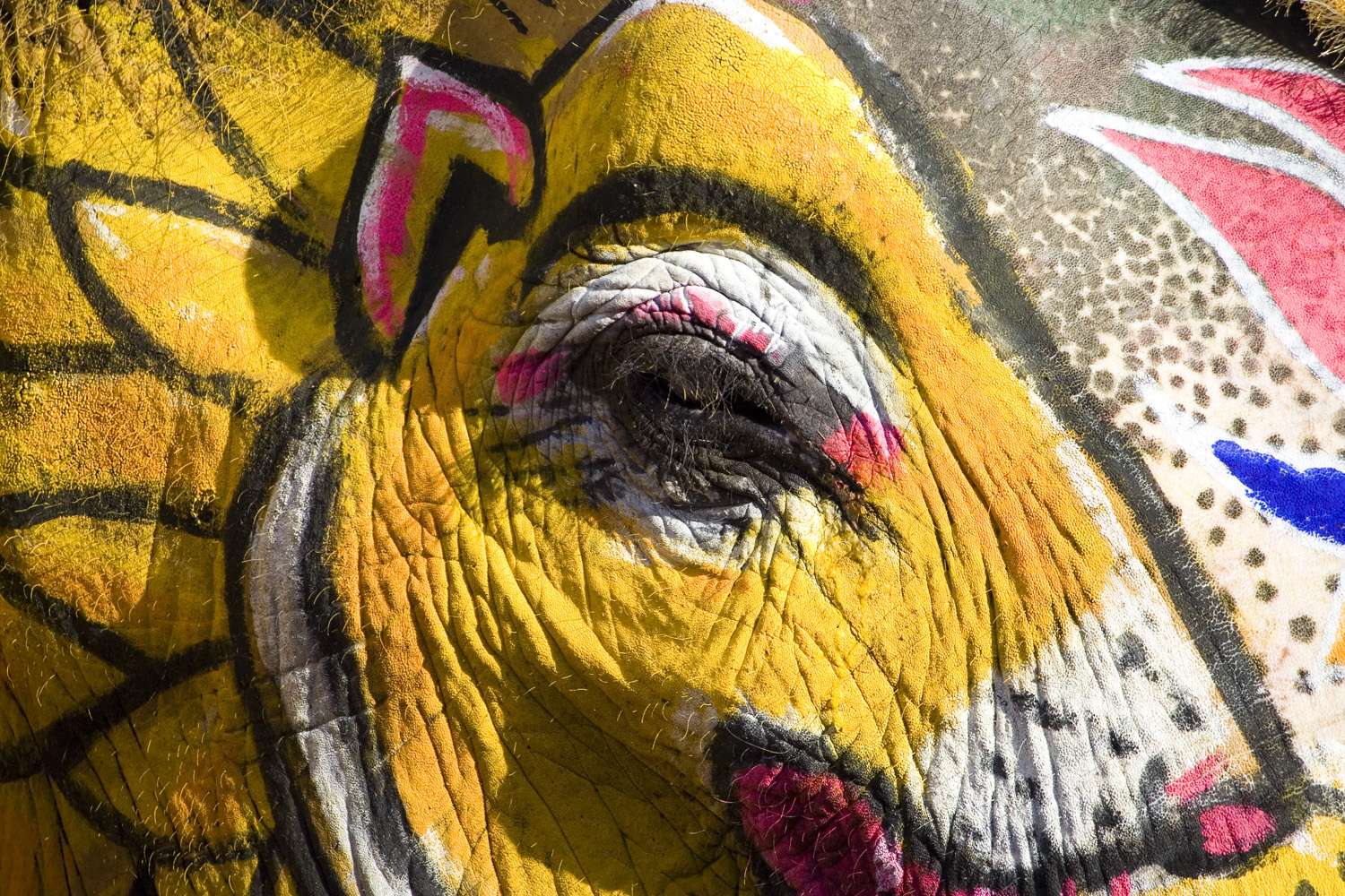 Elephant at Holi Festival (Andy Webb)