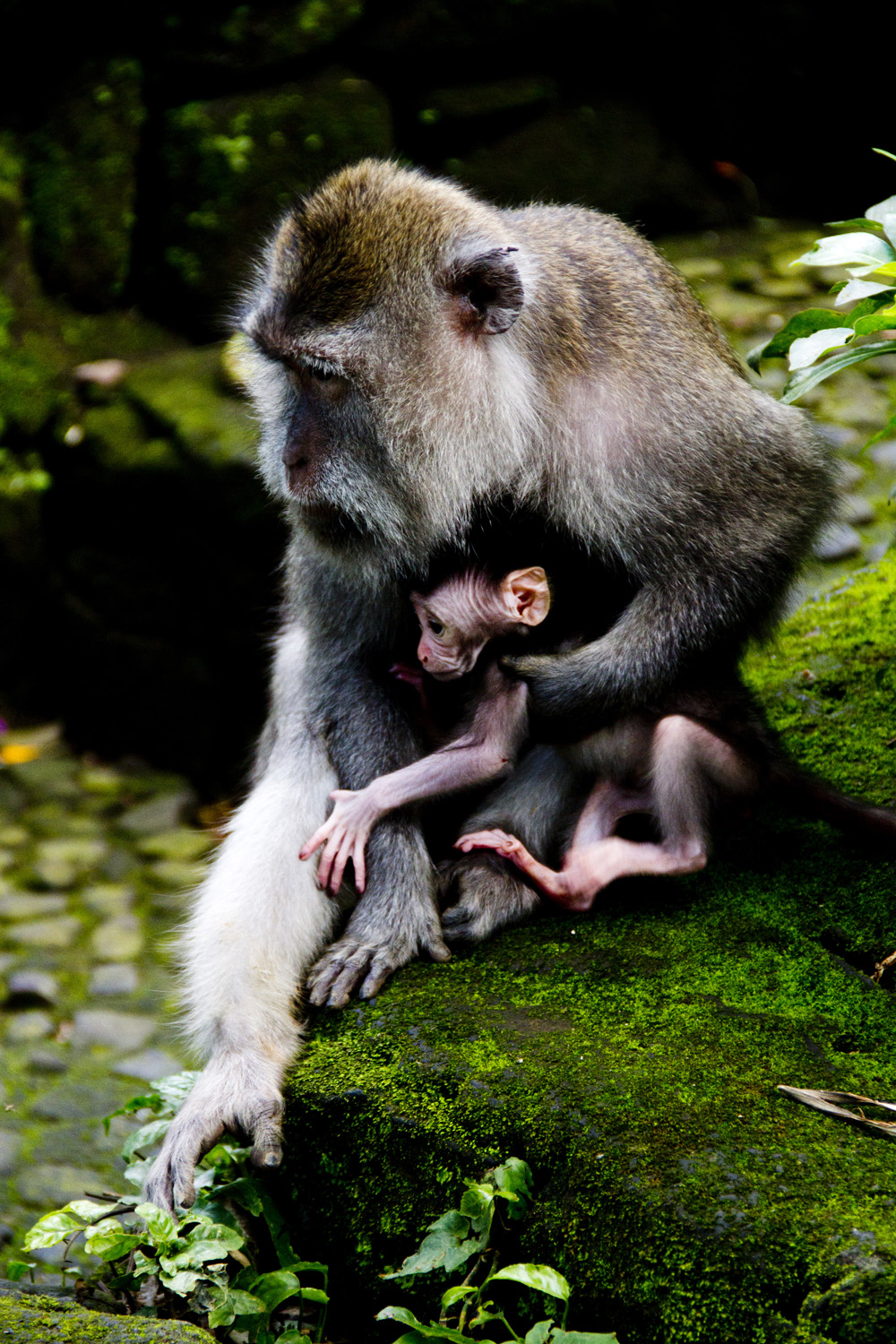 Mother and child (Andy Webb)